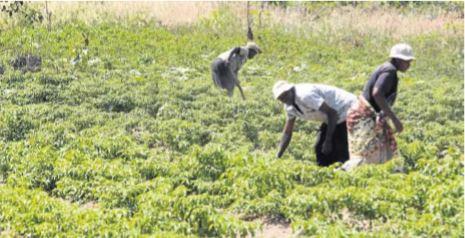 PDAC com financiamento emergencial para agricultura