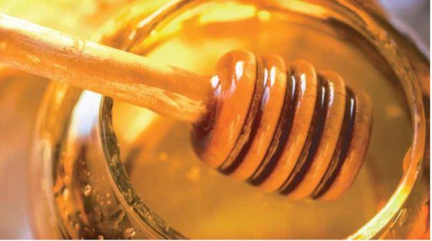 Moxico: mel – renovar para rentabilizar