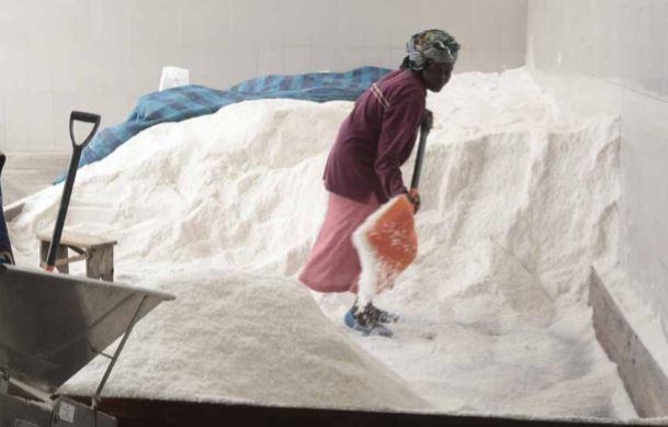 Empresários querem produzir este ano 2.500 toneladas de sal