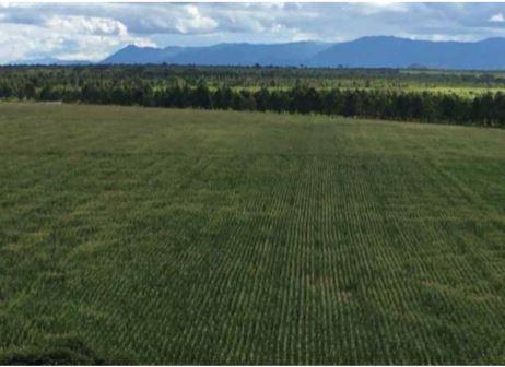 """Fazenda """"Rio Verde"""" aumenta  produção de cereais e leguminosas"""