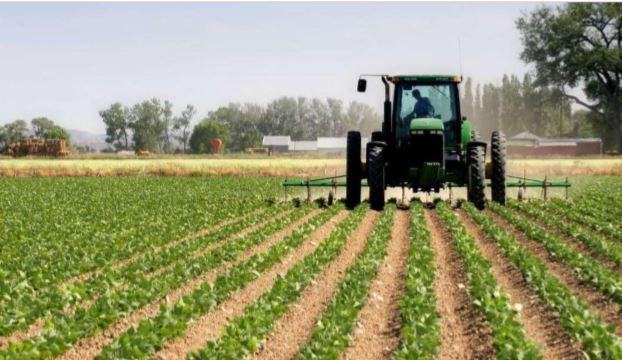 Nova Agrolider prevê colher 30 mil toneladas de batata-rena na Quibala