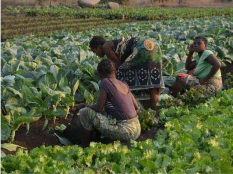 ADrA sugere reforço ao sector da agricultura com a redução dos órgãos ministeriais