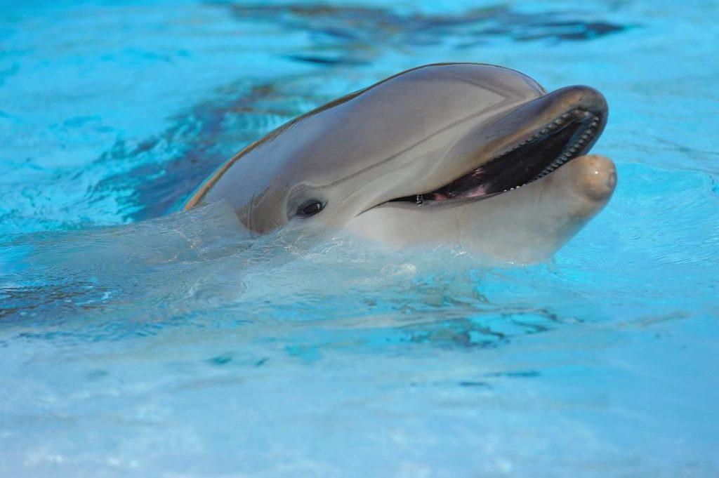 Golfinhos voltam a Moçâmedes
