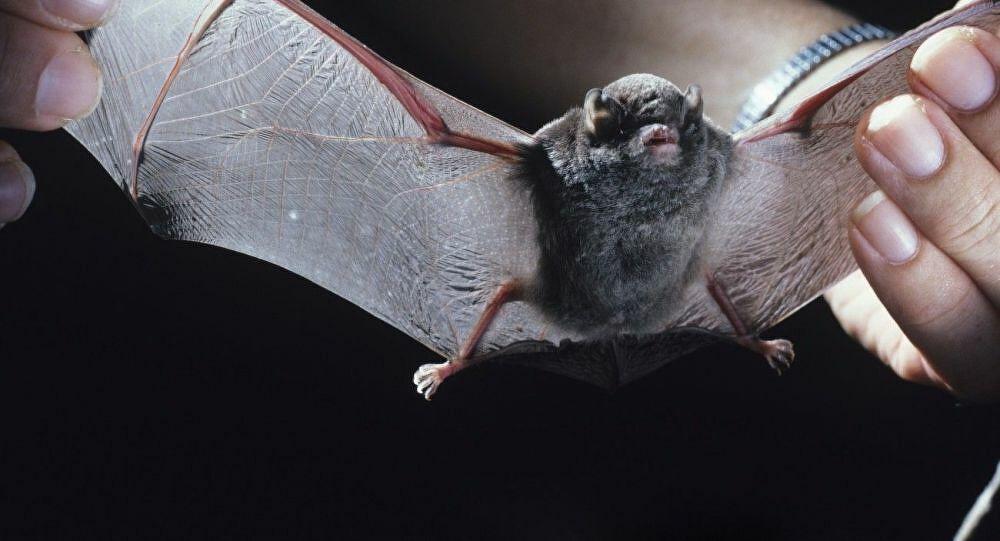 Laboratório de Wuhan admite ter 3 estirpes vivas de coronavírus de morcego