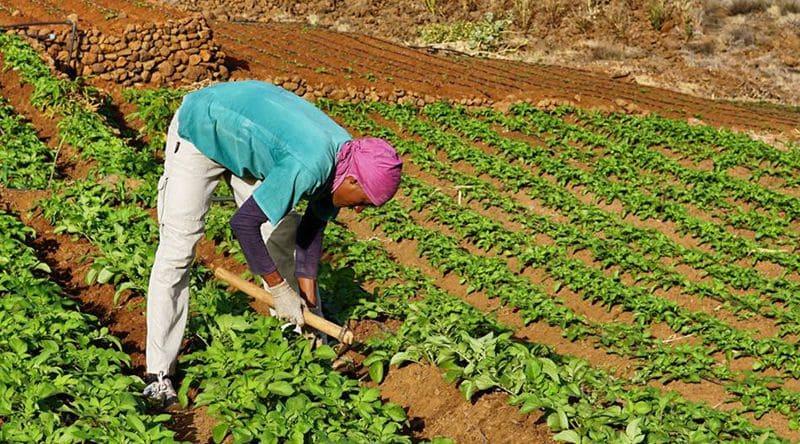 FAO apoia dez mil famílias em agro-negócio no Cuanza Sul