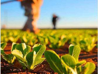 AGRIHUÍLA junta produtores locais para comercializar seus produtos em três dias no Lubango