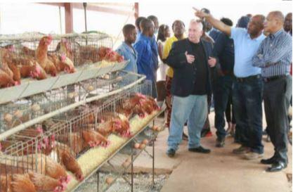 Avicultores abandonam o negócio por falta de recursos financeiros