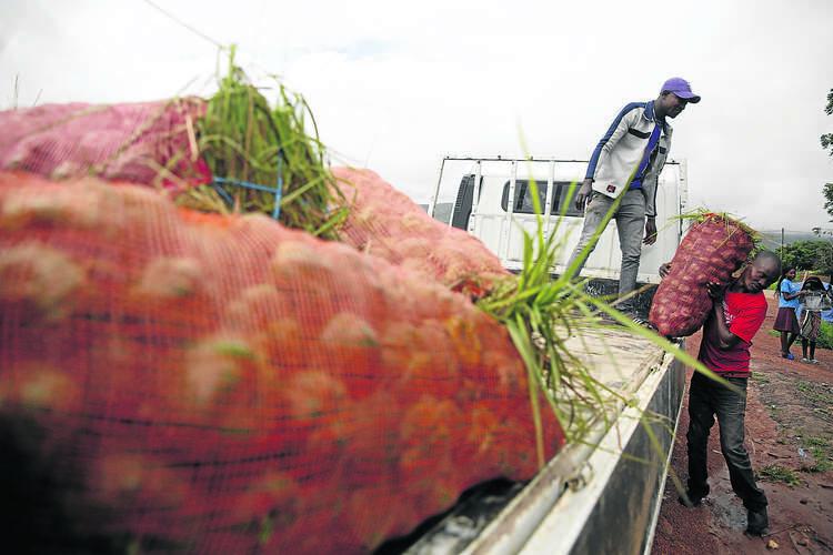 Executivo 'acerta agulhas' para escoar produção do campo para zonas de consumo