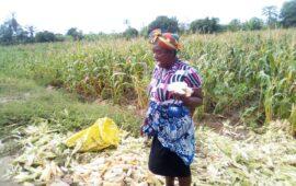 Pequenos produtores queixam-se do preço de adubo