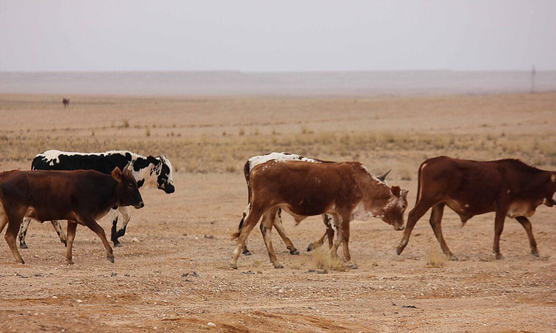 Exclusão de filhos aumenta roubo de gado no Sul do país