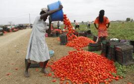 O sector do agro-negócio lidera a lista de financiamentos com kz 863 milhões