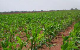 Fazenda Pungo Andongo vai investir USD 15 milhões em equipamentos agrícolas e consumíveis