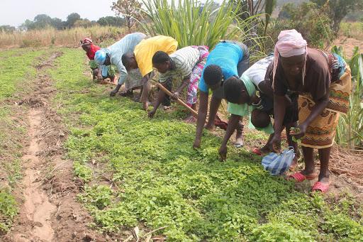 Investigador defende fixação de preços dos produtos do campo para garantir rentabilidade da agricultura familiar