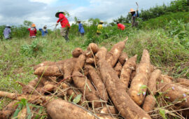 Província do Cuanza-Sul tem registados 268 projectos