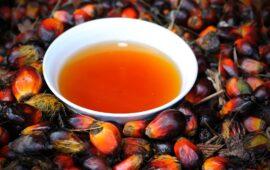 Sete pessoas morrem após consumirem óleo de palma