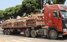 AIA contra o corte de 600 mil metros cúbicos de madeira por ano