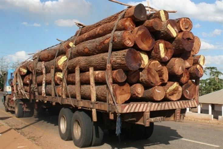 Atraso na emissão de licenças compromete campanha florestal na Lunda Sul