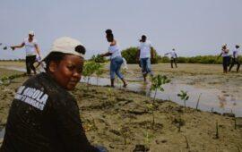Especialistas africanos abordam conservação de mangais em Luanda