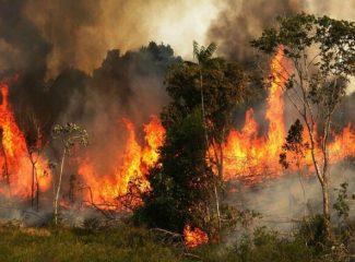 Angola na lista dos países da África subsaariana com mais incêndios florestais